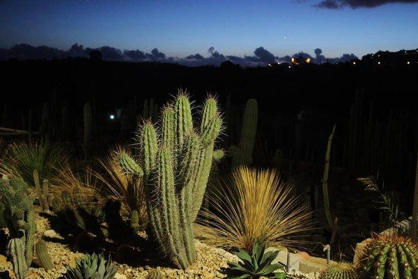 Botanical Park Garden Cactus - фото 20