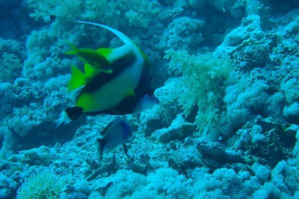 Villa Sharm - Luxury Beach Side Private Villa - 8