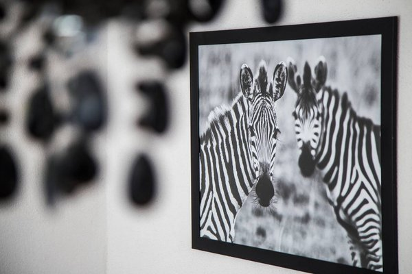 Zebra Old Town - фото 20