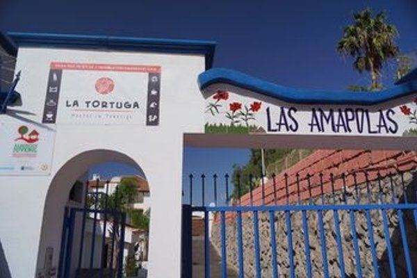 La Tortuga Hostel - фото 15