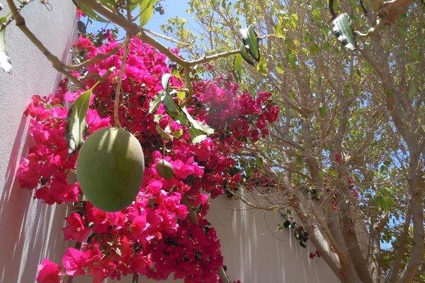 Casa Mango - фото 11