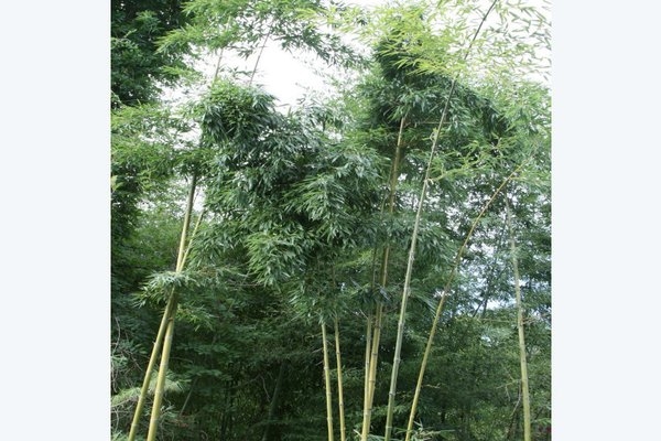 Гостевой дом «Бамбучок» - фото 9