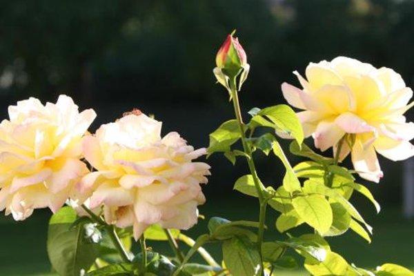 Villa Meri - 20