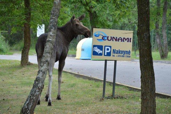 Cunami - фото 19