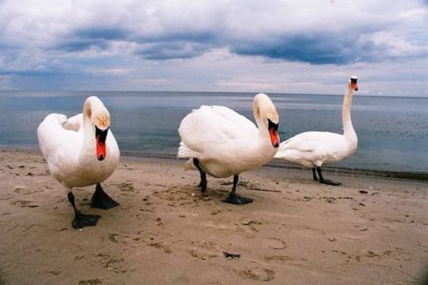 Atputas komplekss Albatross - фото 6