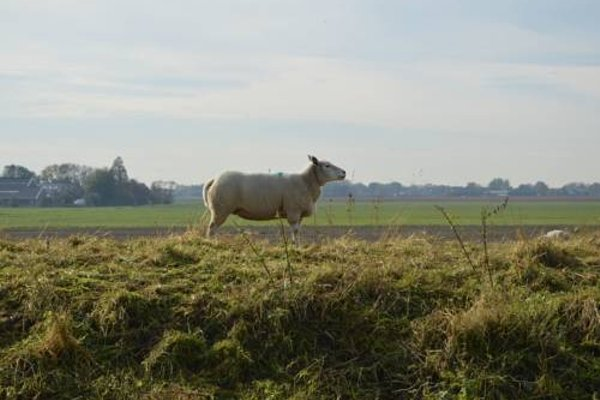 Het Biesbosch huisje - 22