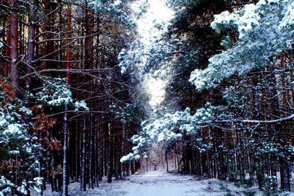 Агроусадьба Шишканы - фото 21