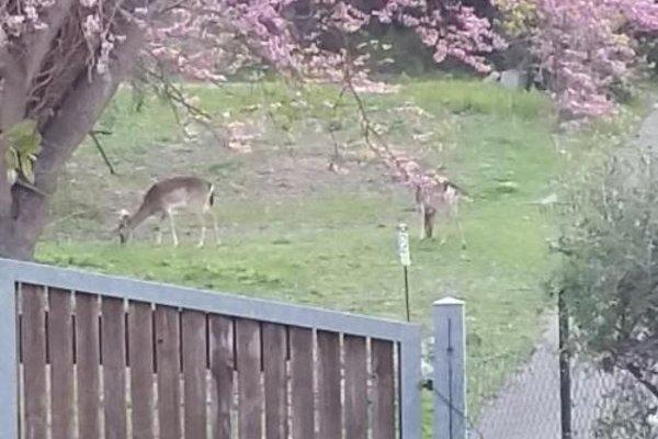B&B La Casa Di Cosa - фото 7