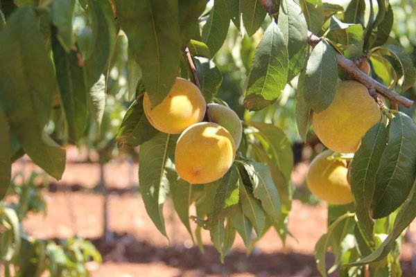 Agriturismo Agrifoglio - фото 18