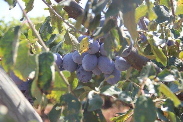 Agriturismo Agrifoglio - фото 19