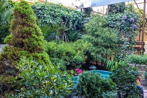 Пальмовый двор - фото 18
