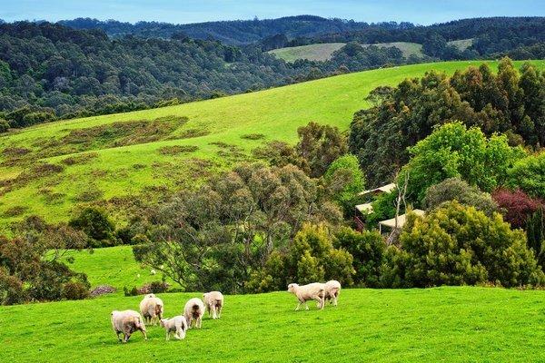 Johanna River Farm & Cottages - фото 13