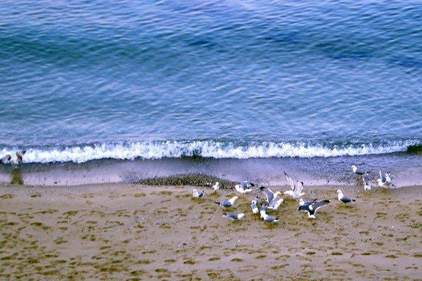 Морски бряг (Morski Briag) - фото 21