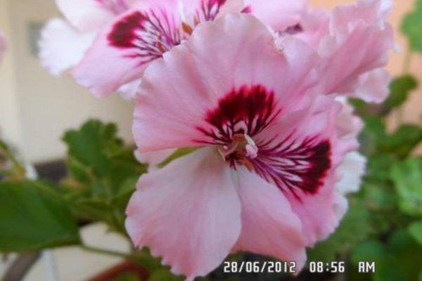 Gardenia Apartments - фото 15