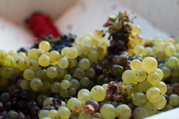 Agriturismo La Torricella - фото 11