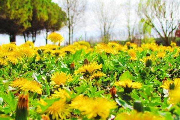 Agriturismo Le Cipressine - фото 20