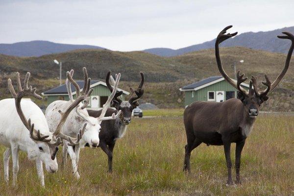 Nordkapp Camping - фото 17