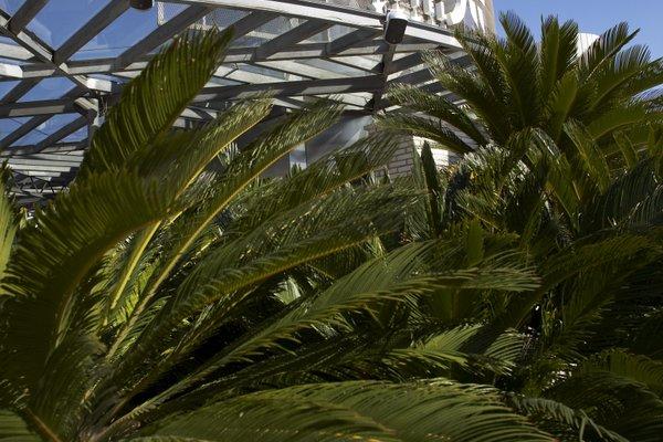 Claris Hotel & Spa GL - фото 19