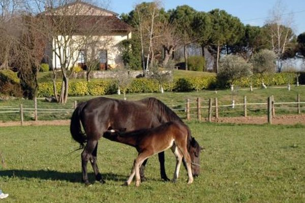 Agriturismo Trebisonda Country Resort - фото 11
