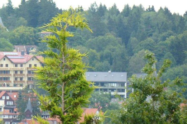 Harzhaus Willkommen - фото 23