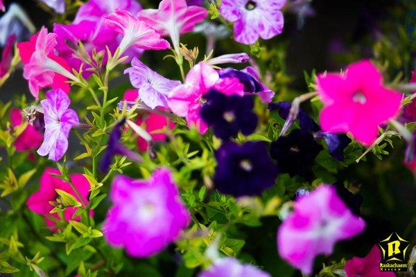 Отель Резиденция Утриш - 5