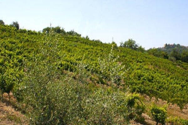 Rosadimaggio - фото 15