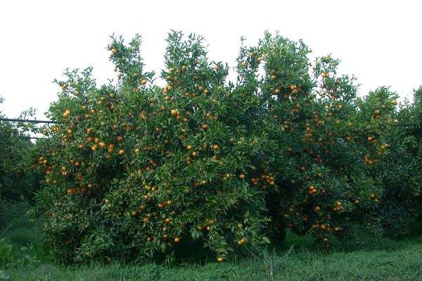 Casa Vacanze Bio Mele - фото 4