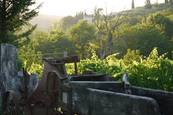Azienda Agricola Polveraia - 16