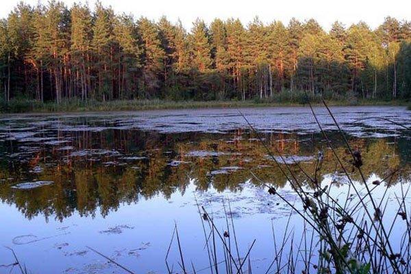 Орловское полесье - фото 60