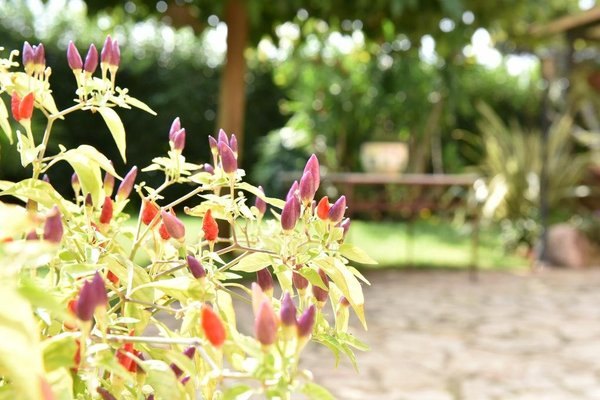 Villa Anastasia - фото 11