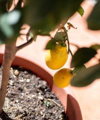 Pavarotti Room - фото 19
