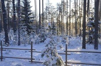 Shishki na Lampushke - Russkaya Derevnya - фото 19