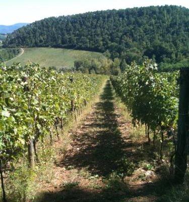 Winery Houses in Chianti - фото 21