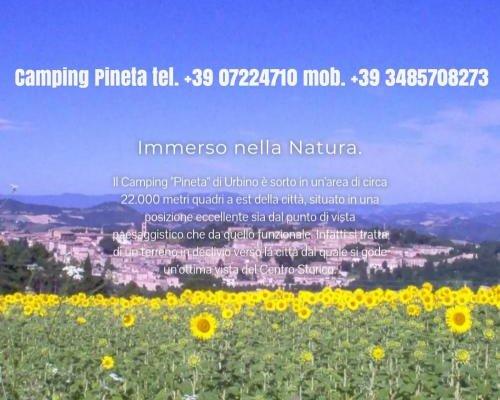 Camping Pineta - фото 2