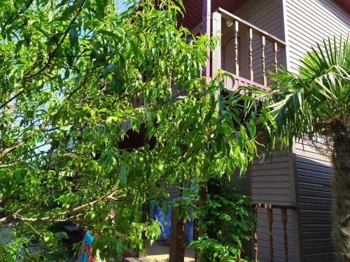 Guest house Uzhnaya Palmira - фото 2