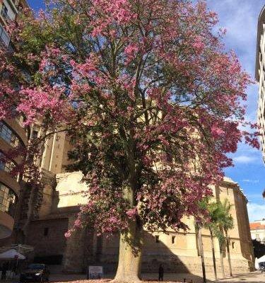 Don Juan de Malaga 2 La Catedral - фото 4