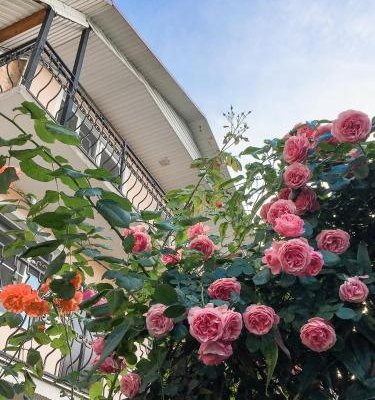 Hotel Sofiya - фото 16