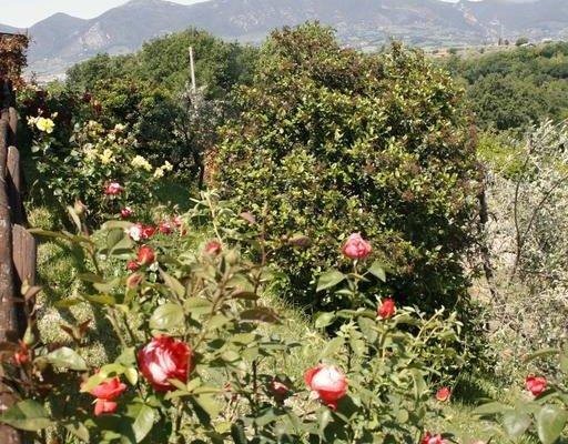 I Cipressi - фото 4