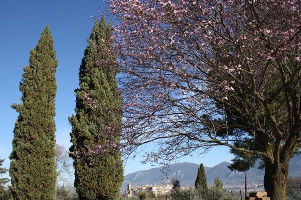 I Cipressi - фото 6