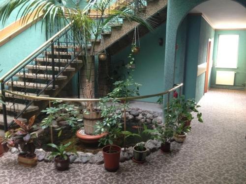 Hotel Julian - фото 21