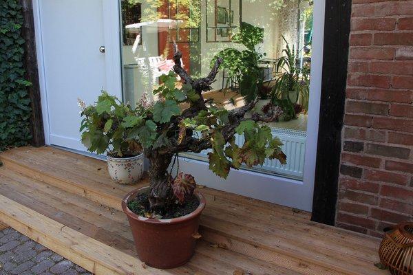 greenhouse zentral im grunen - фото 16