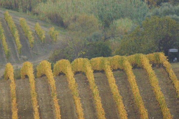 Casa Vacanze Magnolia - фото 12