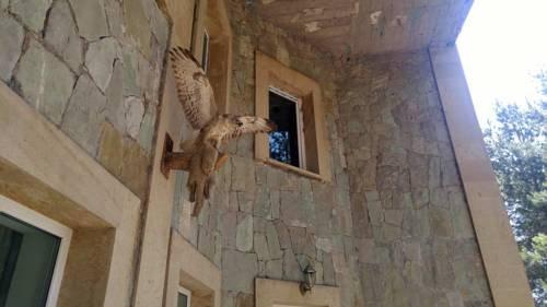 Hotel Kambuz - фото 12