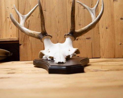 Harzchalet - фото 1