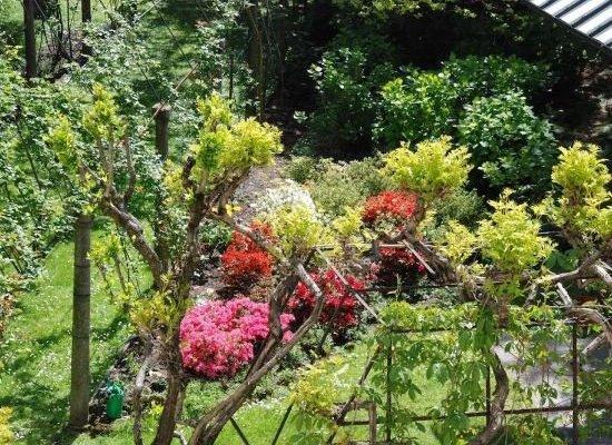 La Canarina Bed & Breakfast - фото 13
