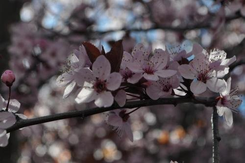 Apart Hotel La Bora - фото 15