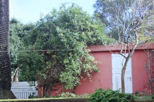 El Perenquen - фото 3