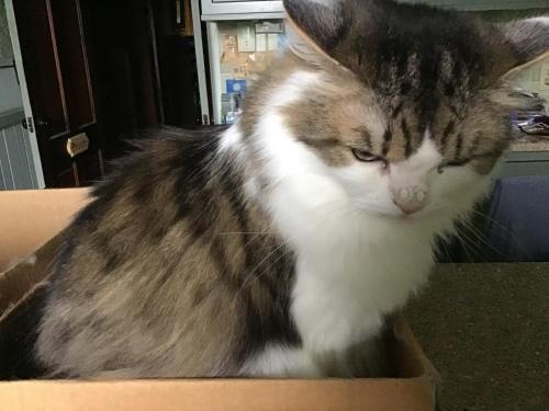 Photo of Allen House Inn