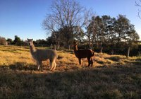 Отзывы muswellbrook northside B&B