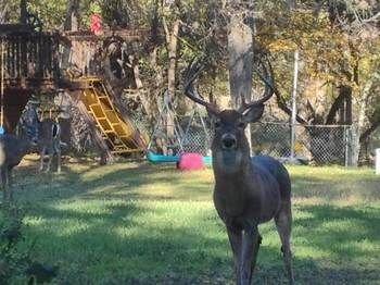 Photo of Park-like Backyard on 1 Acre